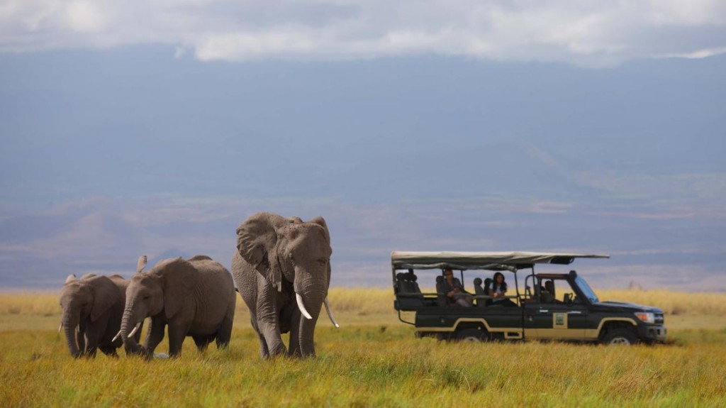 Game Drive Elephants