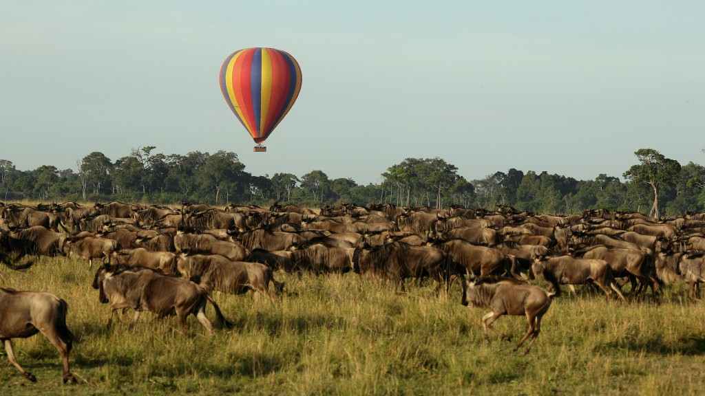 Balloon Safari Wildebeests