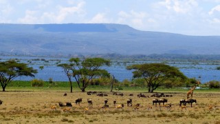 3-Days-Lake-Naivasha-Safari-Copy